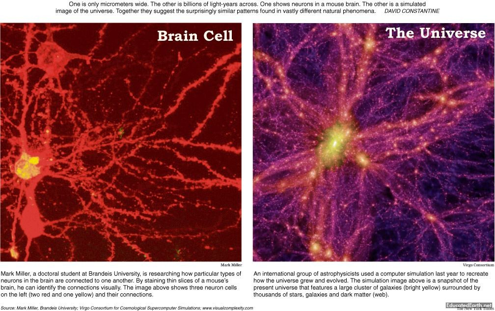 Brain Cells & The Universe